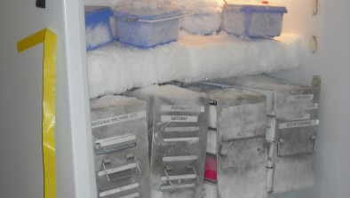 Host an annual freezer cleanout