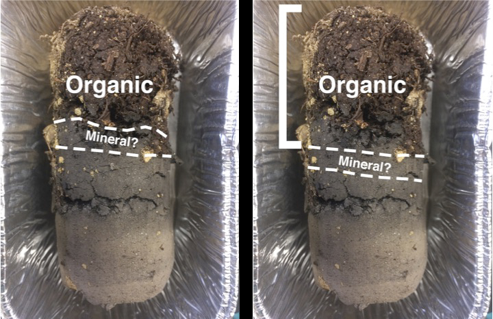 Using the new methods, cores were split based off color and textural change, as well as 1 cm intervals below to test for percent soil organic matter.
